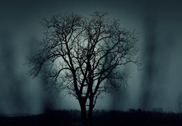 tree-407256_1920
